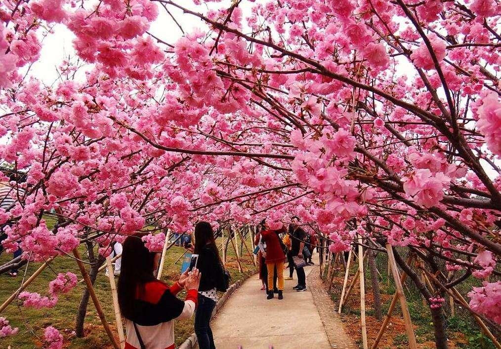 亚洲无ma区春暖花开_春暖花开旅行季,你有推荐的国内赏花地吗?