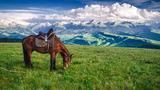 空中草原上的黑骏马