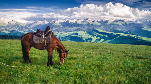 空中草原上的黑駿馬