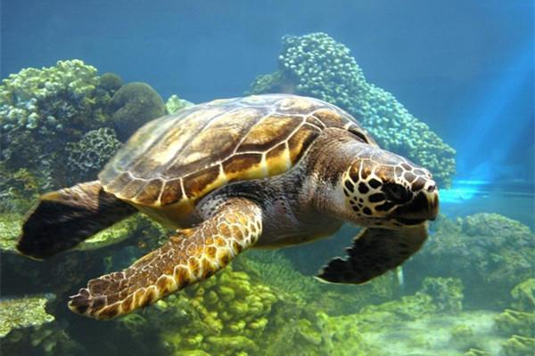 <巴厘岛南湾+海龟岛+玻璃船+洋人街+精油SPA一日游>含接送