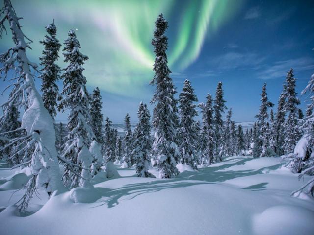 <加拿大育空白馬極光追獵5日游>白馬市區觀光/野生動物保護區/印第安小鎮/4次極光觀測/免費熱飲小食/含狗拉雪橇、冰釣體驗(當地參團)