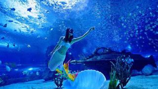北京潜水考证游
