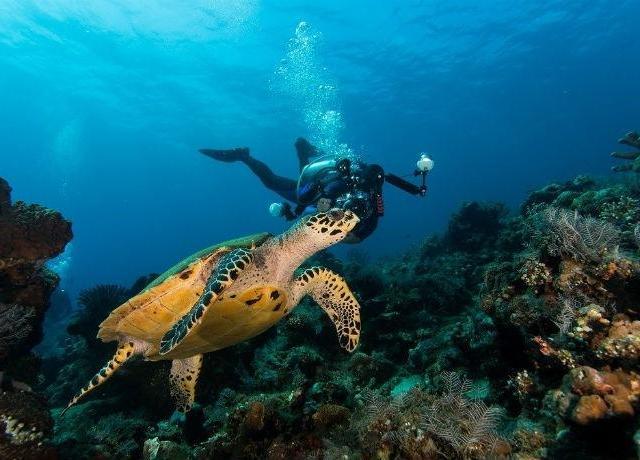 <馬來西亞沙巴亞庇東姑阿都拉曼公園浮潛/水肺潛水2次體驗(含酒店接送)>