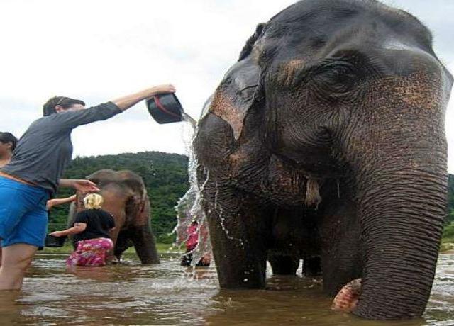 <清邁湄丹大象營中文一日遊(乘牛車/坐竹筏/觀蘭花園/酒店接送)>