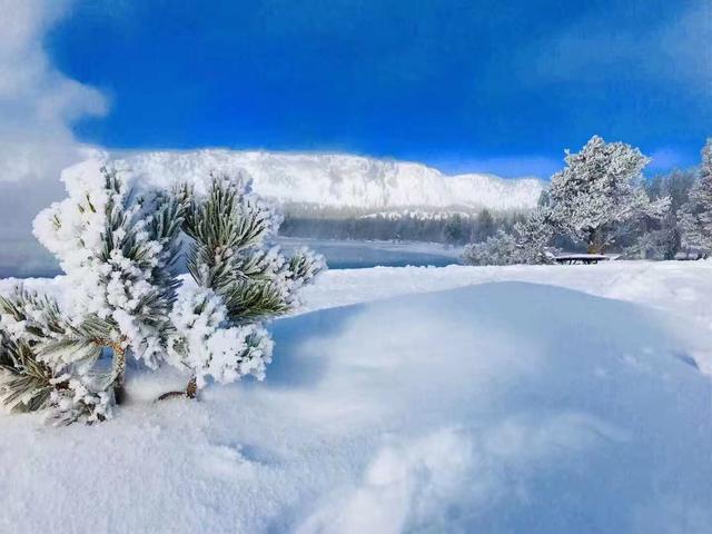 <美国冬季黄石公园+盐湖城+拉斯维加斯+洛杉矶7日游> 雪地巴士体验/马拉雪橇/大提顿精美冬景/滑雪胜地雪王山/拉斯可选西峡南峡自由行/洛杉矶+拉斯下团(当地参团)