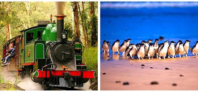 < 企鹅岛+小火车中文15人小团一日游> 企鹅岛+小火车中文15人小团一日游(普通看台+小火车+接送+小费)