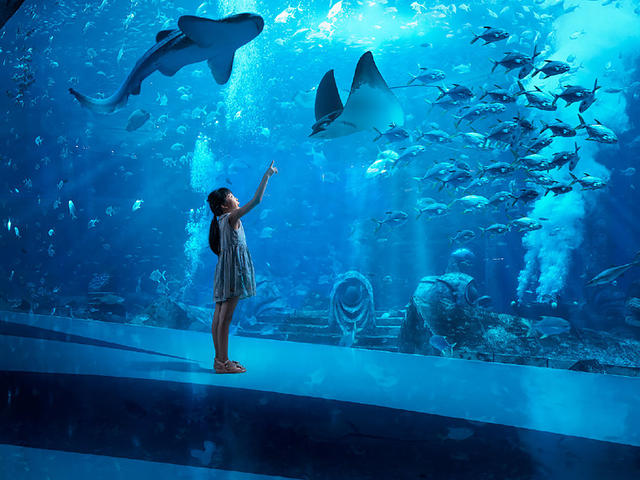 <三亞亞特蘭蒂斯水世界+水族館門票+C秀 1日游 >亞特蘭蒂斯水世界/失落的空間水族館/C秀門票、可自行前往