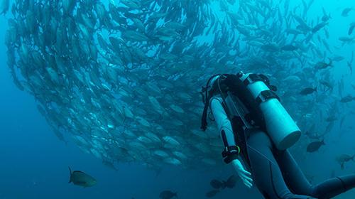 <塞班岛蓝洞潜水写真PADI潜水证考证aow ow潜水课程考证培训>海底美景自由潜水