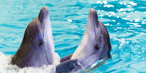 <巴厘岛南湾海豚中心体验>多场次可选+海豚互动+酒店接送+与海豚亲密接触,体验不一样的亲子乐趣